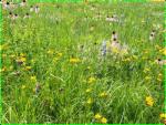 Baker Prairie in early June.