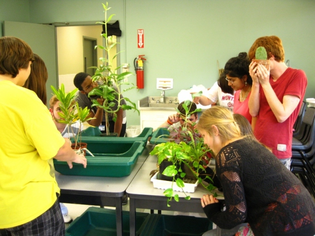 Students at Arkansas School for Mathematics, Sciences and the Arts examine plants in Jon Ruehle's classroom. (Photo by Jon Ruehle)