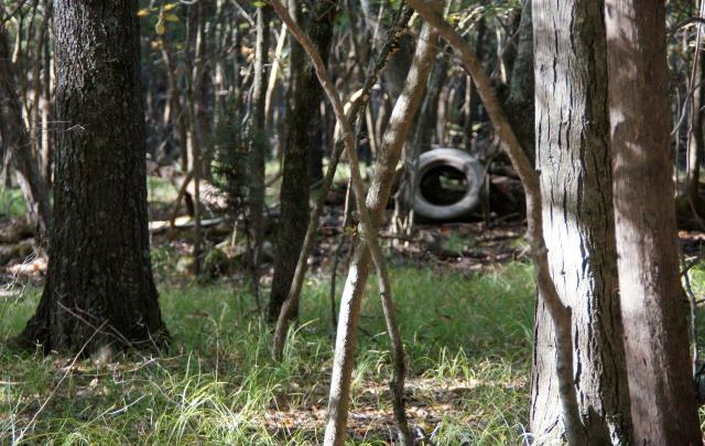 A discarded tire in the White Oak Bayou wetland in Maumelle, Arkansas (Photo by Martha Bowden)
