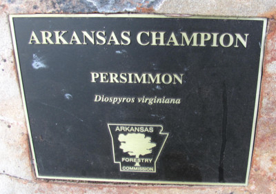AR Forestry Commission Plaque - Champion Persimmon