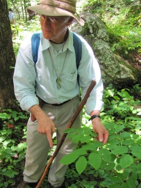 Eric and American Yellowwood – Cladrastis kentukea