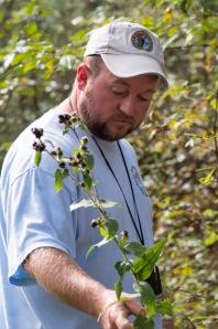 Botanist extraordinaire Brent Baker carefully examines a frostweed (Verbesina virginica).