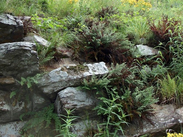 Photo 1: Woolly lipfern grows well in sunny rocky area. Photo – May 28.